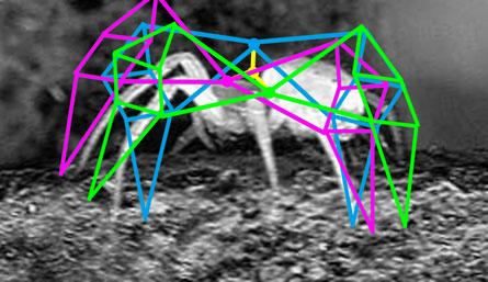 spider_geometry.jpg